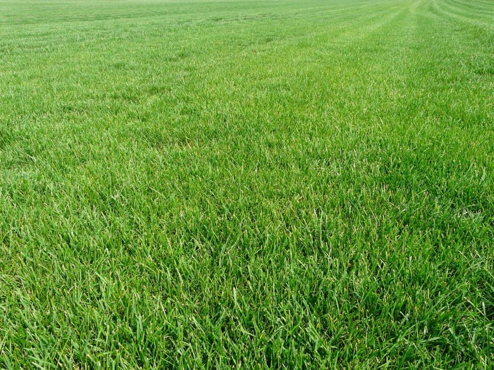 Купить газонную траву в ярославле